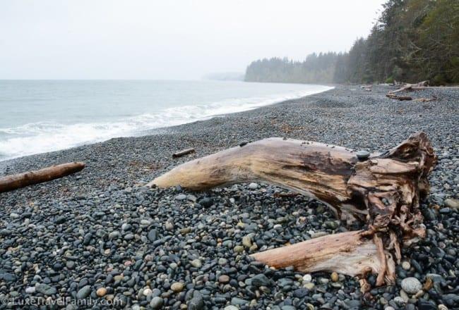 pebbles, tree stump and the ocean at Sandcut Beach