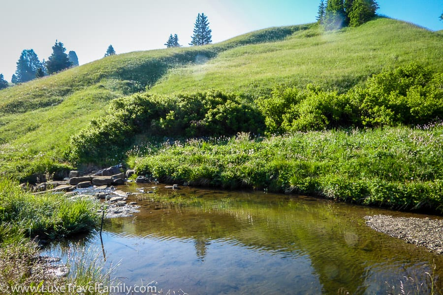 Mountain stream in the Alpe di Siusi