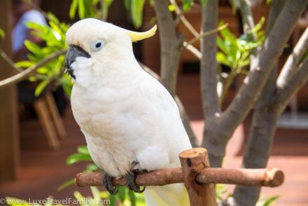 rescue bird the four seasons lanai