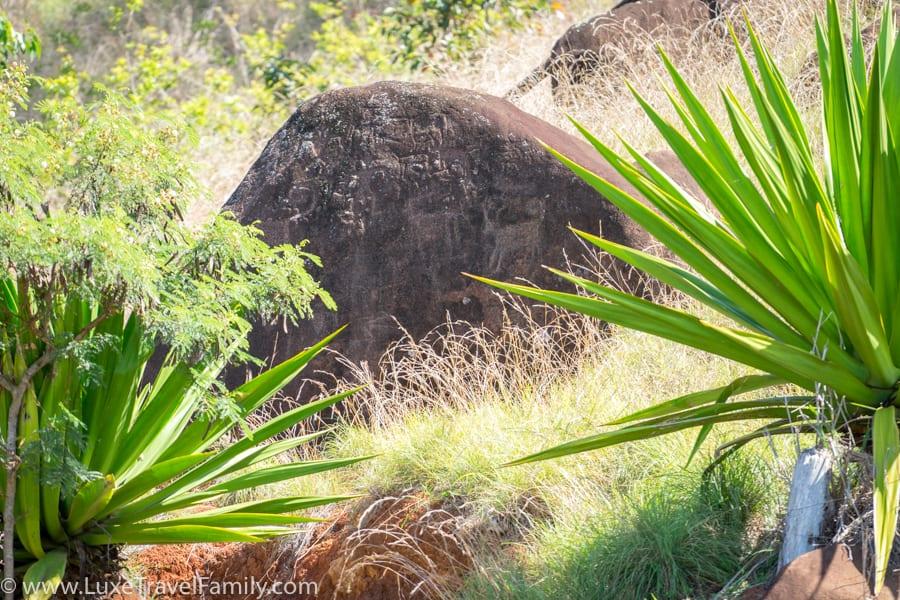 Petroglyphs Lanai Polaris off-road tour