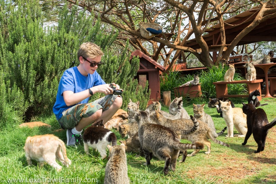 Boy surrounded by cats at Lanai Cat Sanctuary