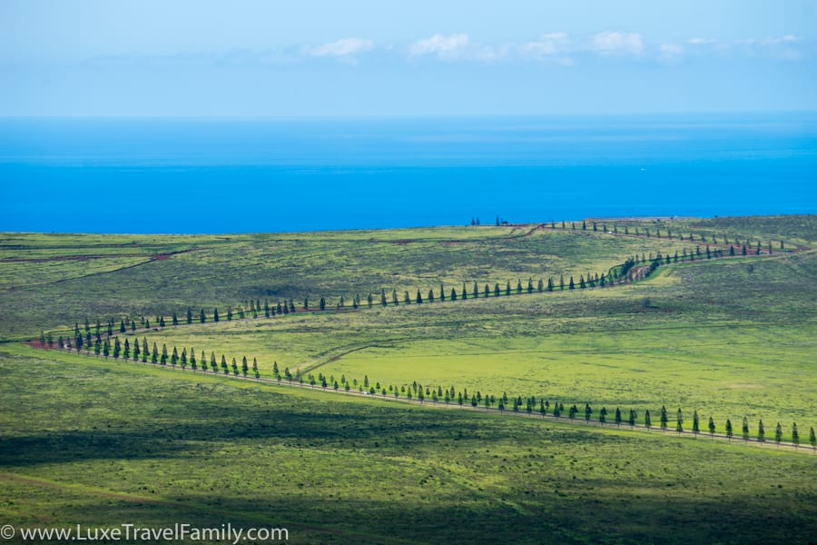 Views of Cook Pines and Pacific Ocean on Lanai