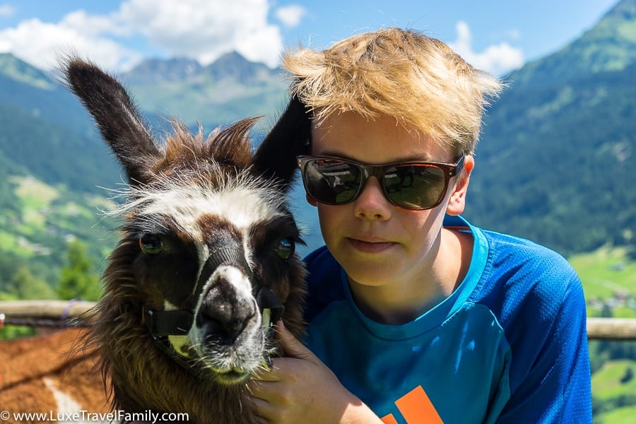 Creature Cuddles & Alpine Joy - Family Llama Trekking in Vorarlberg, Austria