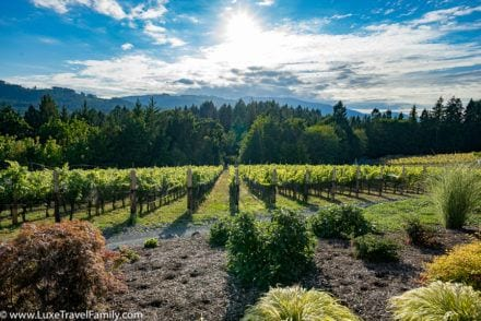 VIneyards cowichan valley day trip from Victoria